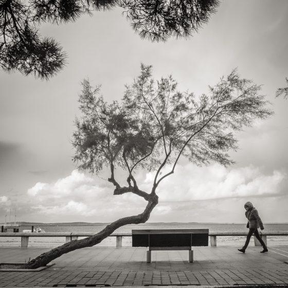 Le vent a tordu un arbre. Je m'en vais au vent mauvais...